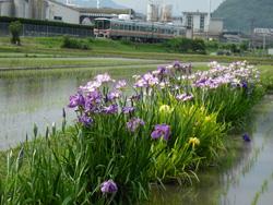 2009年6月/撮影場所:東觜崎-本竜野