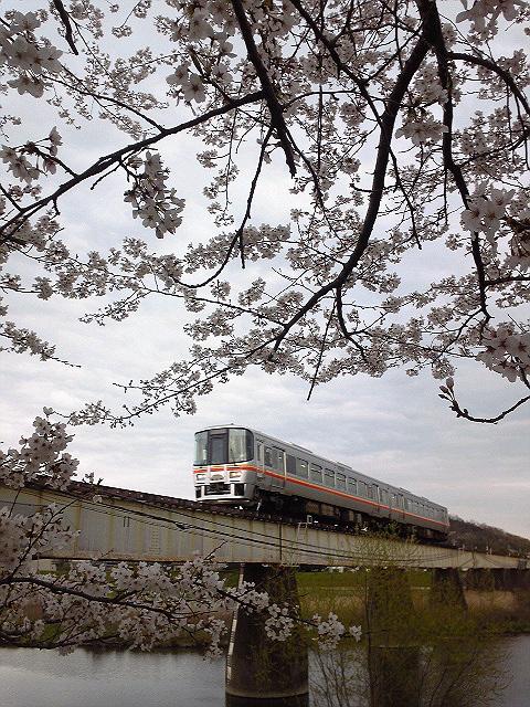 平成22年4月7日/夢前川橋梁と桜と新型車両(その1)