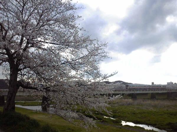 平成22年4月7日/夢前川橋梁と桜と新型車両(その3)