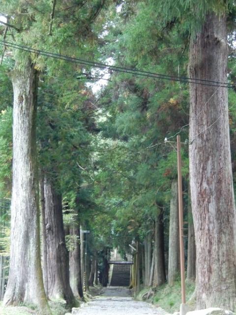 宇府山(うふやま)神社参道の杉 /千本駅